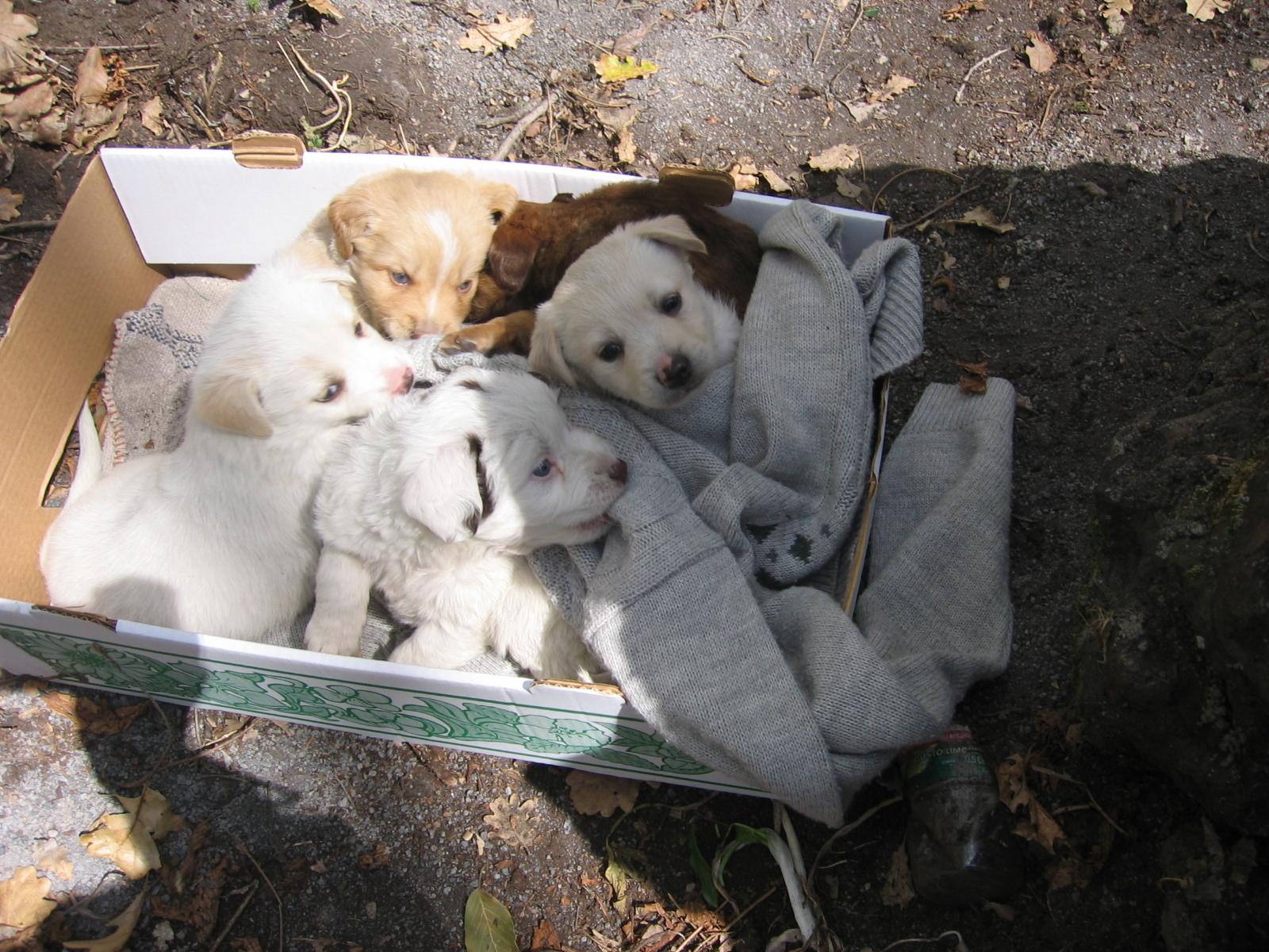 Cani e gatti abbandonati a Caserta, il canile non ha più spazio e non può  accoglierli