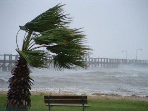 Il vento forte fa danni in Penisola Sorrentina: crollano alberi e calcinacci