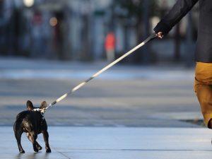 Non usa la paletta per cani, donna presa a bastonate da un 85enne