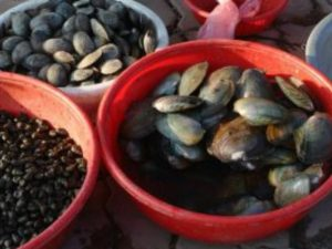 Una tonnellata di frutti di mare pericolosi per la salute sequestrata a Pozzuoli