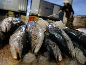 Sequestrato il mercato del pesce di Pozzuoli: irregolarità nei lavori