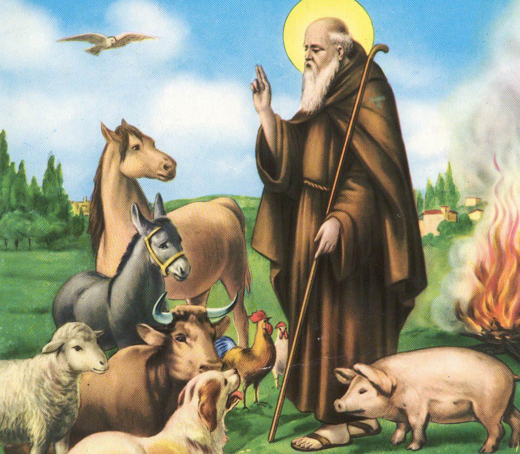 Sant'Antonio Abate, ritratto sempre col maialino al fianco