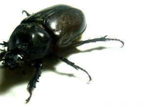 Napoli, ancora insetti in ospedale: scarafaggi al San Giovanni Bosco