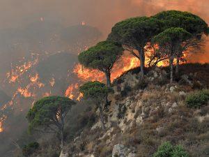 Incendi, in Campania monta la protesta civica: ma è polemica per le diverse manifestazioni