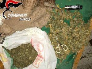 Il cane a guardia della marijuana essiccata: a Licola arrestata coppietta di spacciatori