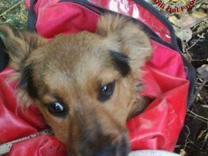 Il cucciolo cade in un dirupo: salvato dai vigili del fuoco