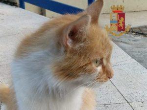 Elsa, la gattina adottata dalla polizia stradale a Napoli