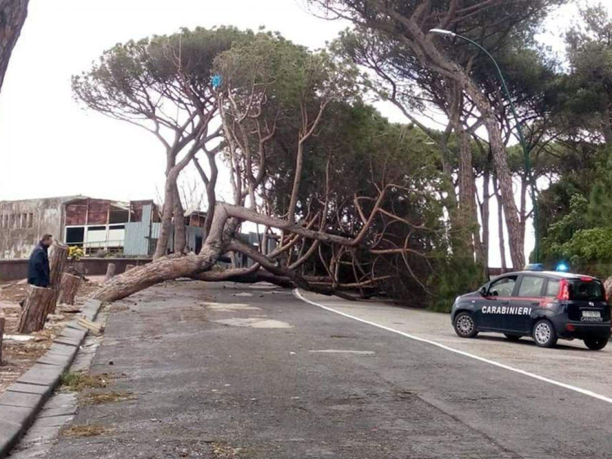 Alberi Ad Alto Fusto Quali Sono alberi crollati a napoli, l'agronomo: sbagliate potature