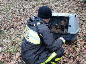 Avellino, sente il pianto di due cagnolini, li fa salvare dai Vigili del Fuoco e li adotta
