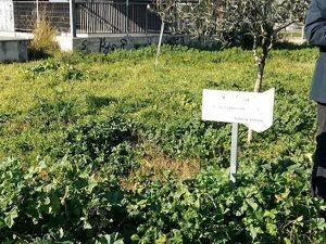 Giorno della Memoria, a Napoli nuova targa per la Shoah al p