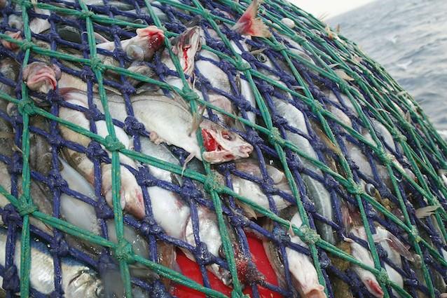 Non rispettare le regole significa condannare molte specie di pesci dei nostri mari