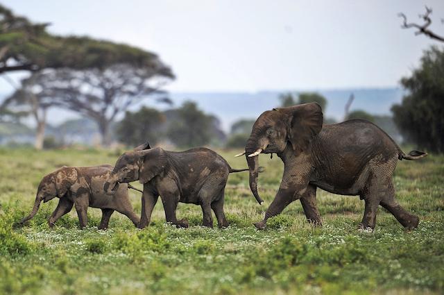 I cartoni animati e la paura dei topi degli elefanti