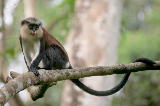 Radici e suffissi servono alle scimmie per costruire messaggi specifici