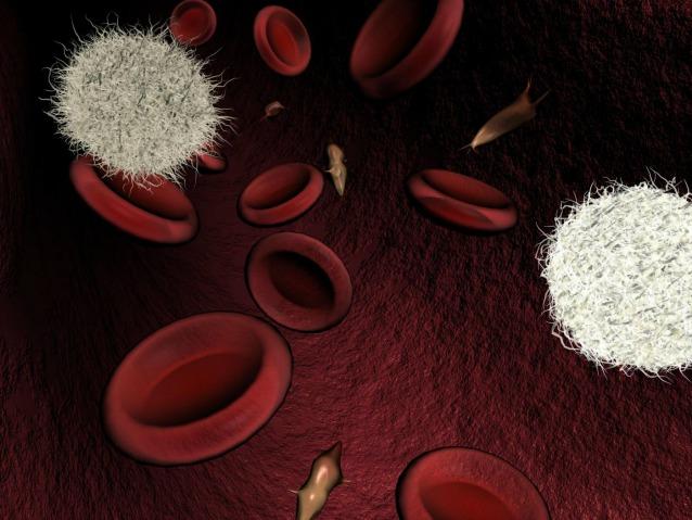 Scoperta una proteina che potenzia il sistema immunitario