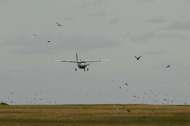 Il comportamento degli uccelli non tiene conto della velocità