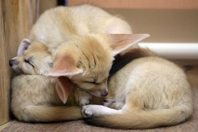 Teneri e affettuosi sono gli animali domestici pi strani for Piccoli piani domestici vittoriani