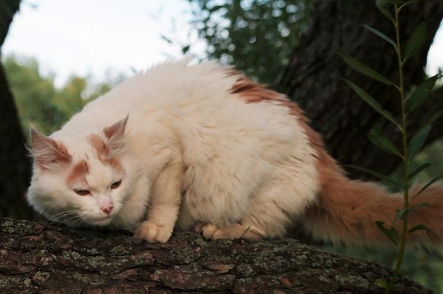 Migliorare il contesto in cui vive il nostro gatto può essere un aiuto