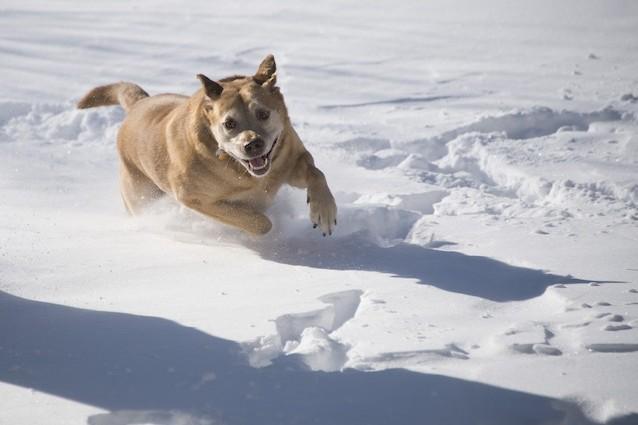 Anche i cani e gatti amano la stagione fredda
