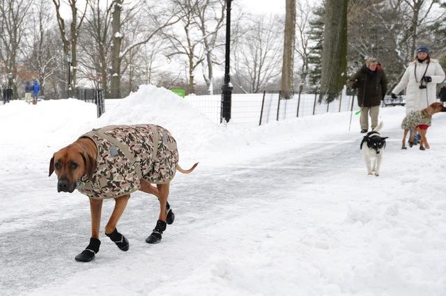 Non sempre il cappottino è il rimedio ideale alle basse temperature