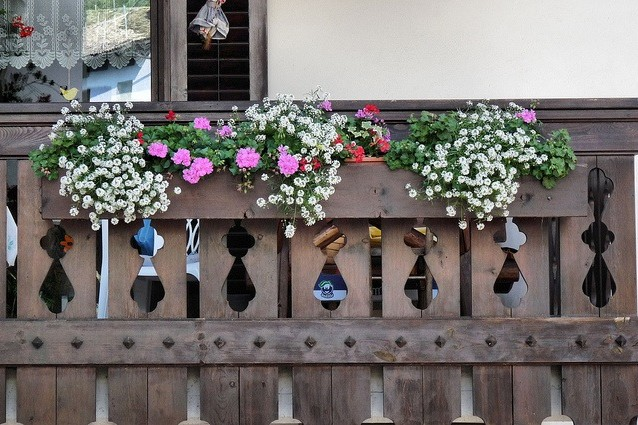 5 piante da balcone che resistono al gelo dell 39 inverno for Piante da balcone