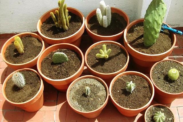 5 piante grasse che hanno propriet curative for Foto piante grasse particolari