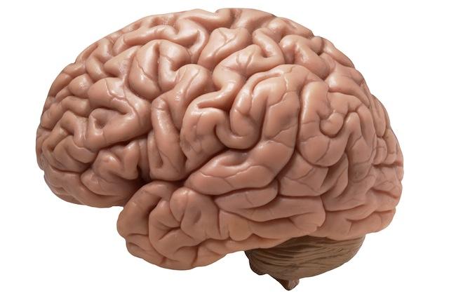 I tumori al cervello potrebbero essere alimentati dall'attività neurale