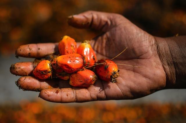 Il basso costo è il principale motivo per il quale le aziende scelgono l'olio di palma