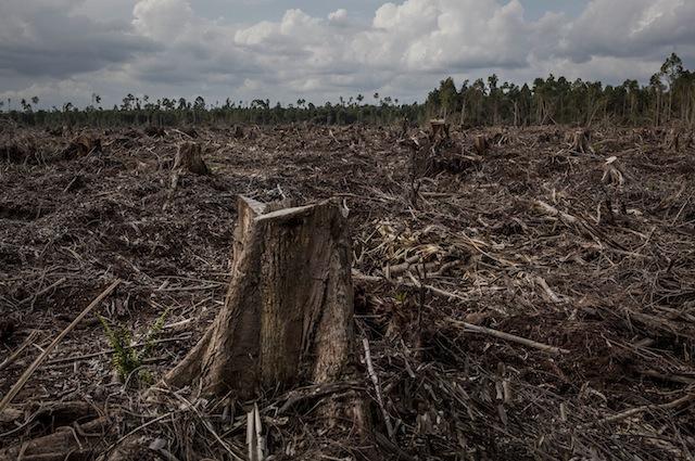 Le piantagioni di palme da olio implicano la deforestazione