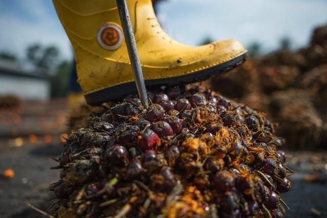 L'olio di palma è dannoso per la nostra salute
