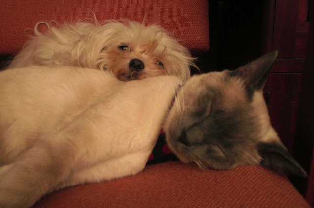Non tutti i cani e i gatti hanno voglia di avere un coinquilino