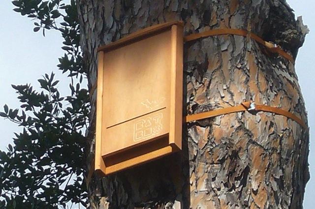 Le bat box ospitano i pipistrelli che si nutrono di zanzare