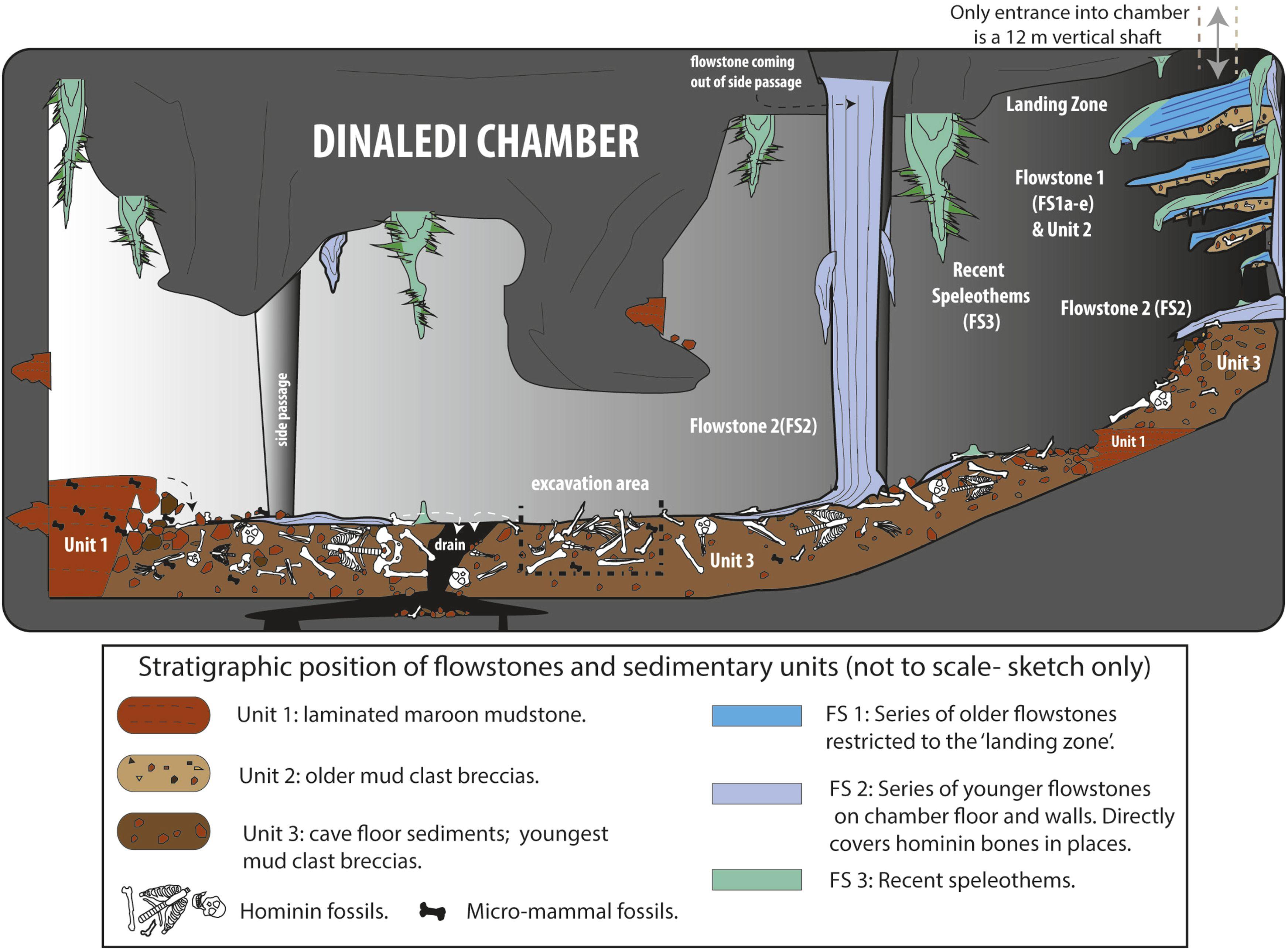 L'Homo naledi è l'ominide che non conoscevamo?