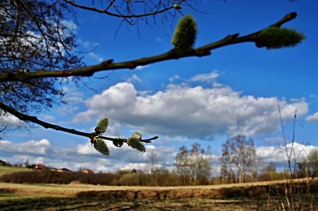Primavera in anticipo