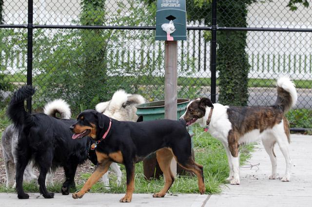 I ricercatori italiani dimostrano il contagio emozionale tra cani