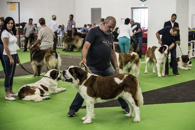 Le malattie dei cani di razza sono il risultato delle selezione artificiale?