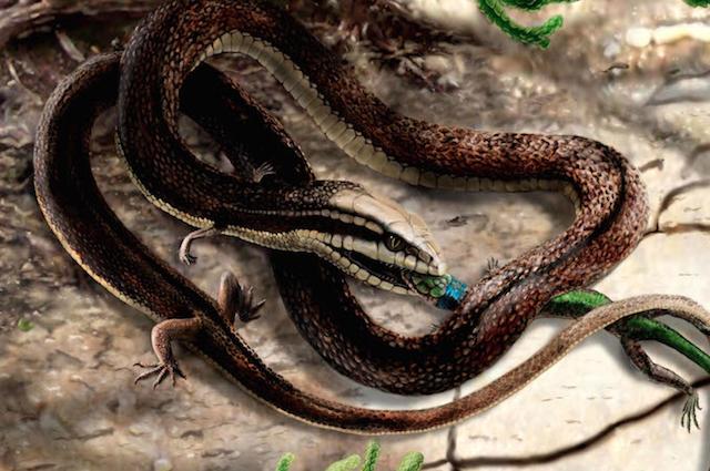 I 7 animali più strani scoperti nel 2015