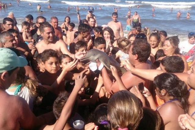 Cosa è realmente accaduto al delfino trovato in spiaggia?