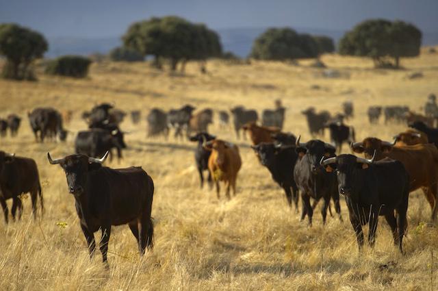 Gli animali che alleviamo e uccidiamo ci stanno distruggendo ed è colpa nostra