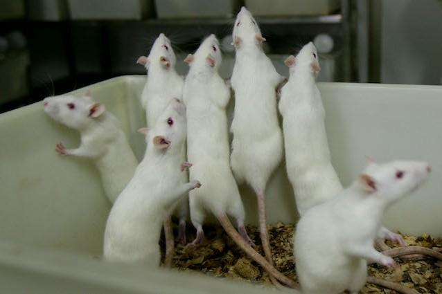 Infertilità: ecco gli spermatozoi funzionali creati da cellule staminali