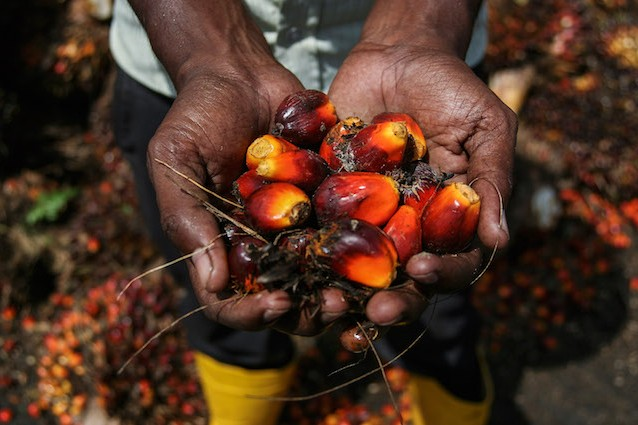 Il frutto della palma