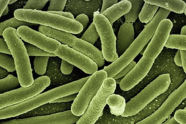 È allarme negli USA per il batterio resistente all'antibiotico più potente del mondo