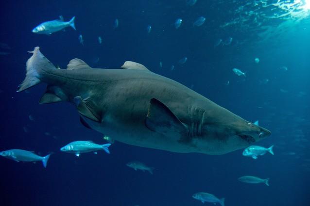 Proprio come noi, anche gli squali hanno diverse personalità