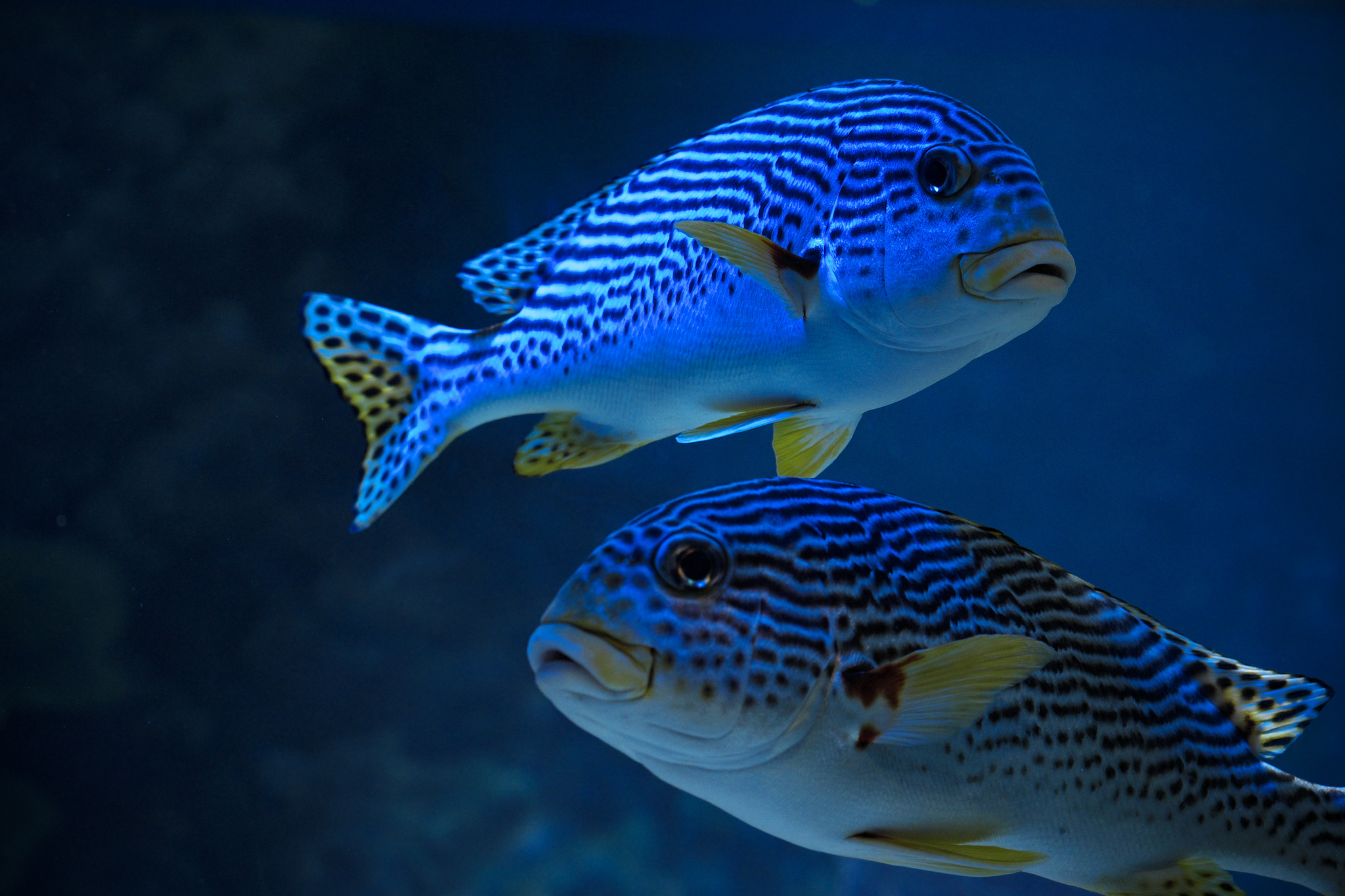 La plastica il fast food dei pesci e ne influenza il for Pesci con la e
