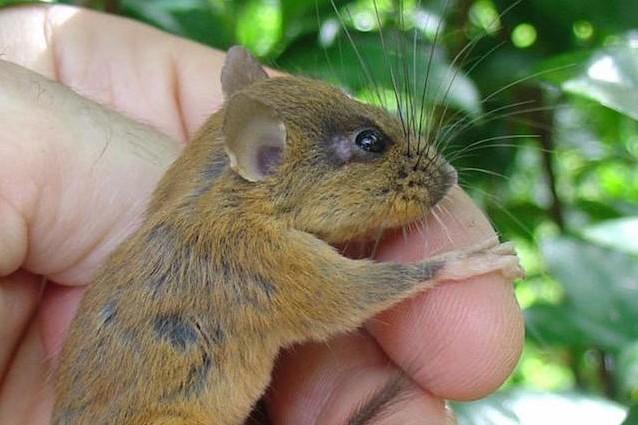 È nelle Filippine l'isola con i mammiferi più originali del mondo