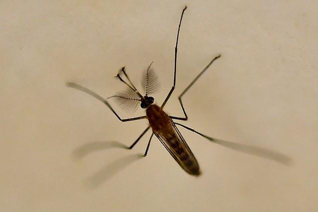 World Mosquito Day: per ricordare che le zanzare uccidono ancora