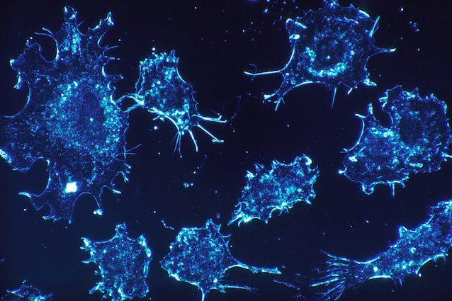 Cos'è l'inibitore ND646, la sostanza che ferma i tumori