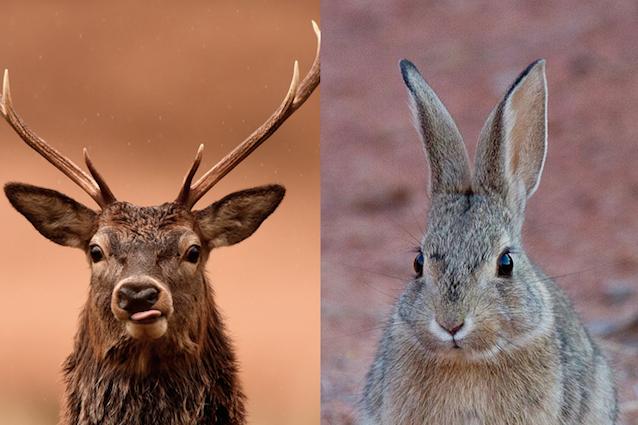 Cacceresti un cervo o un coniglio? La tua personalità influenza la risposta, ecco come