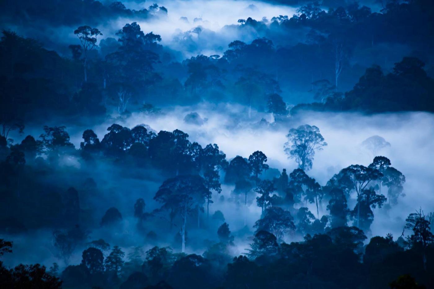 La Danum Valley, in Malesia, in una foto rilasciata dal World Conservation Society. Credit: Liana Joseph/PA Wire