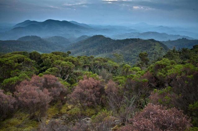 Congo, foto rilasciata dal World Conservation Society. Credit: Liana Joseph/PA Wire