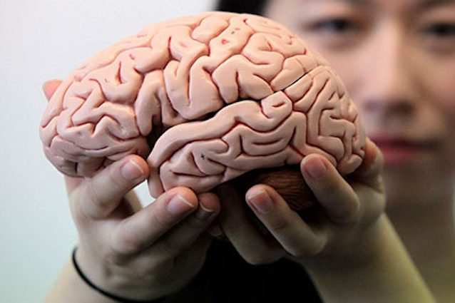 """Anche il nostro cervello ha le """"rughe"""""""